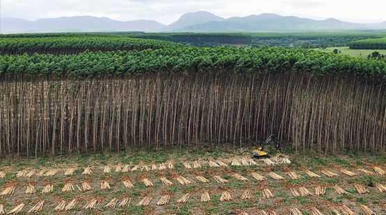 Plano de corte eucalipto